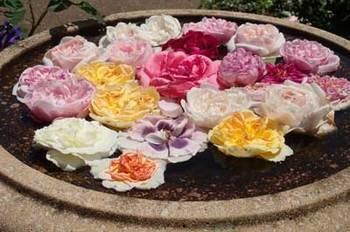 roseP5110874small.jpg