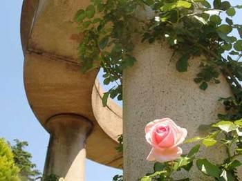 roseP5110896small.jpg